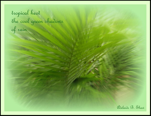 'tropical heat / the cool green shadow / of rain' by Adelaide Shaw