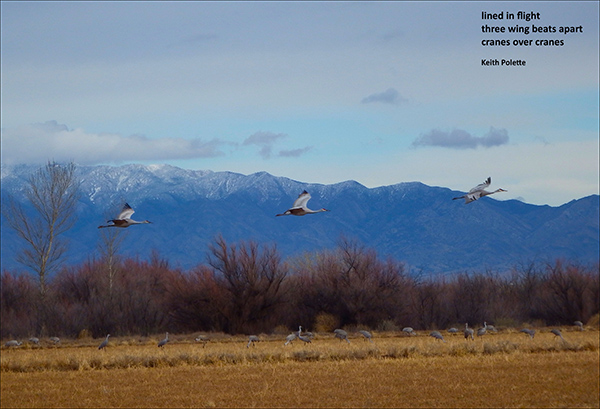 'lined in flight / three wingbeats apart / cranes over cranes' by Keith Polette
