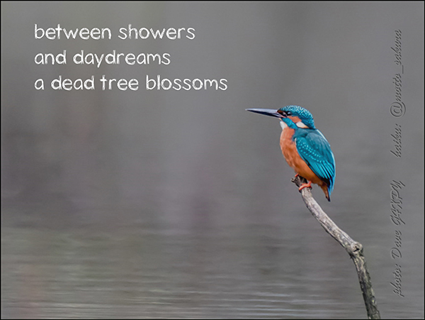 'between showers / and daydreams / a dead tree blossoms' by David Kelly
