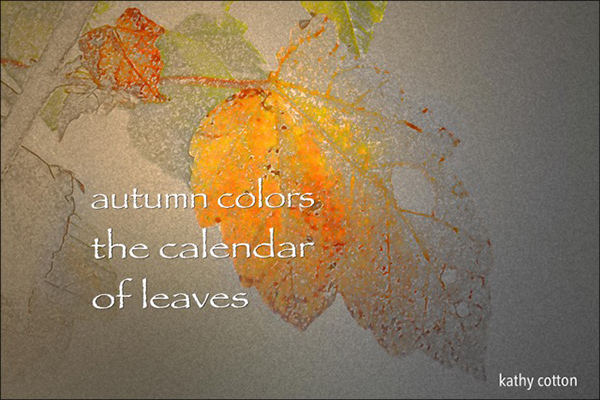 'autumn colors / the calendar / of leaves' by Kathy Cotton