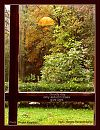 'cloudy day / only autumn trees / give light' by Magdalena Banazkiewicz. Art by Wojtek Kulpinski.