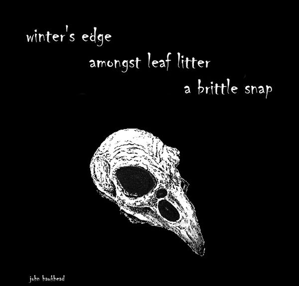 """winter's edge / amongst leaf litter / a brittle snap' by John Hawkhead"