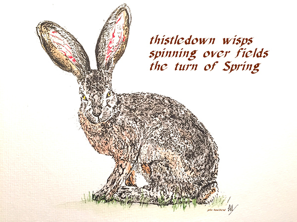 'thistledown wisps / spinning over fields / the turn of spring' by John Hawkhead