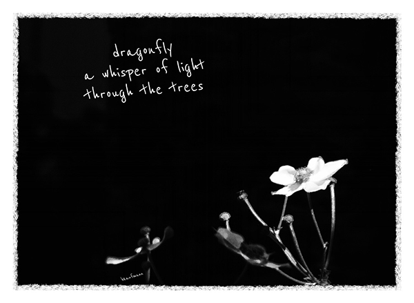 'dragonfly / a whisper of light / through the trees' by Barbara Kaufmann