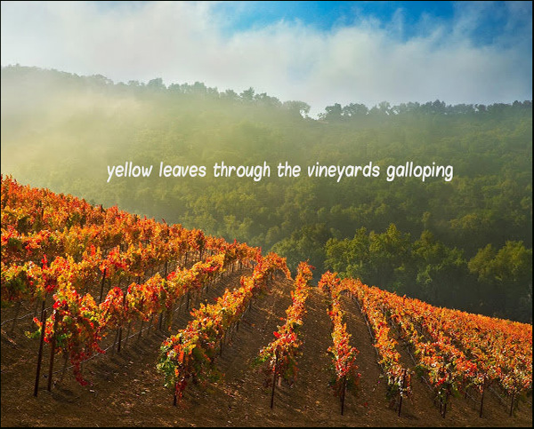 'yellow leaves through the vineyards galloping' by Pere Ristecki