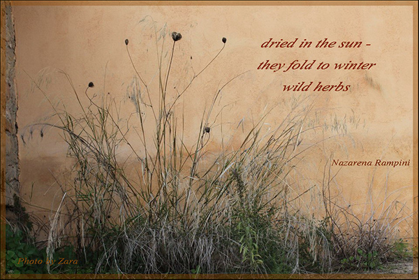 'dried in summer / they fold to winter / wild herbs' by Nazarena Rampini
