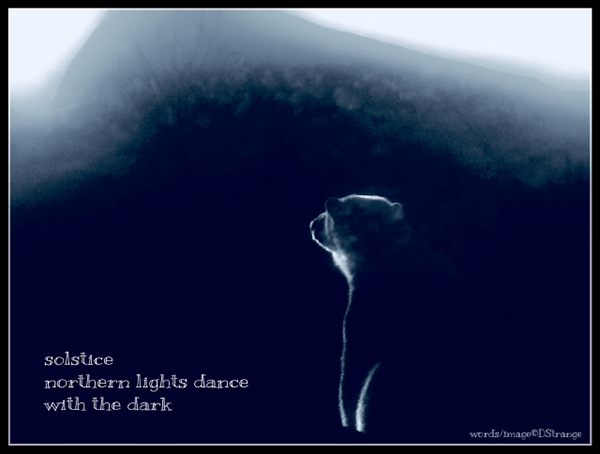 'solstice / northern lights dance / with the dark' by Debbie Strange. Haiku first published by Australian Haiku Society Dec 2017