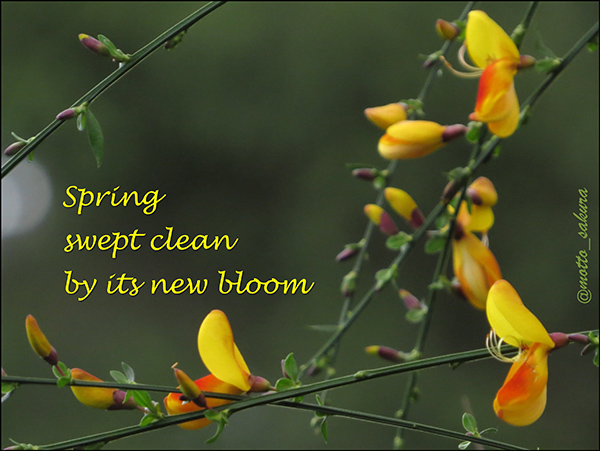 'spring / swept clean / by its new bloom' by David Kelly
