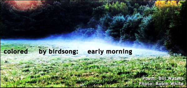 'colored by birdsong: early morning' by Bill Waters. Art by Robin White