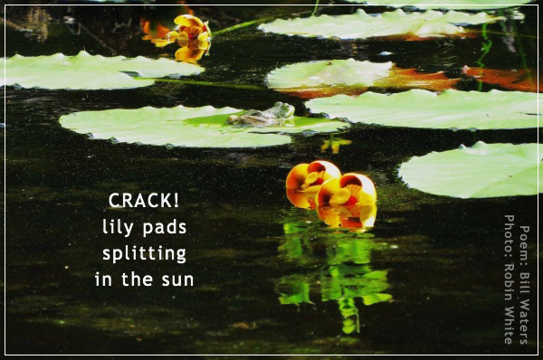 """crack! / lily pads / splitting / in the sun' by Bill Waters. Art by Robin White."