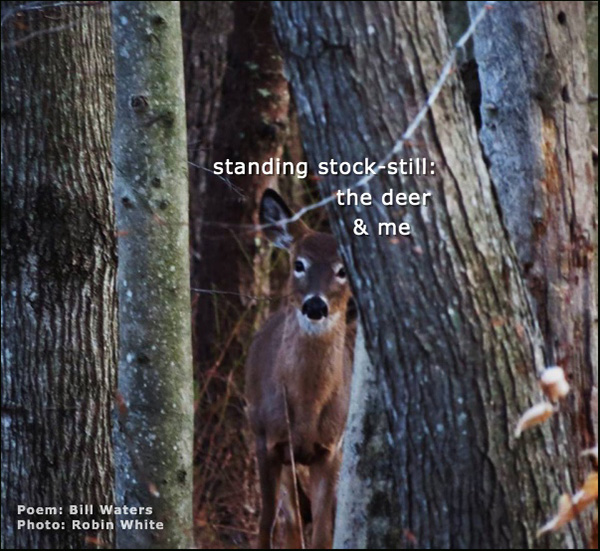 """'standing stock-still: / the deer / & me"""" by Bill Waters. Art by Robin White."""