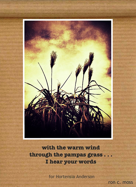 'with the warm wind / through the pampas grass... / I hear your words' by Ron Moss