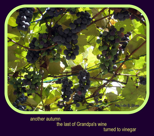 'another autumn / the last of grandpa's wine / turned to vinegar' by Adelaide Shaw