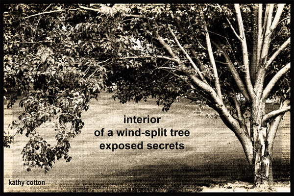 'interior / of a wind-split tree / exposed secrets' by Kathy Cotton