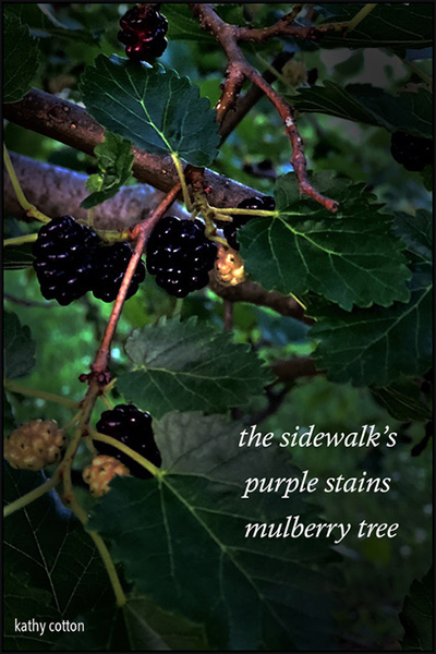 'the sidewalk's / purple stains /  mulberry tree' by Kathy Cotton