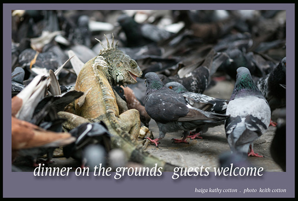 'dinner on the grounds   guests welcome' by Kathy Cotton