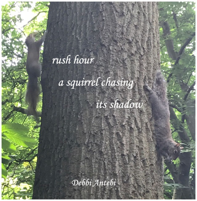 'rush hour / a squirrel chasing / its shadow' by Debbi Antebi