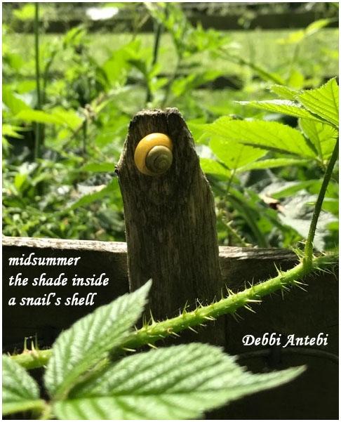 'midsummer / the shade inside / a snail's shell' by Debbi Antebi