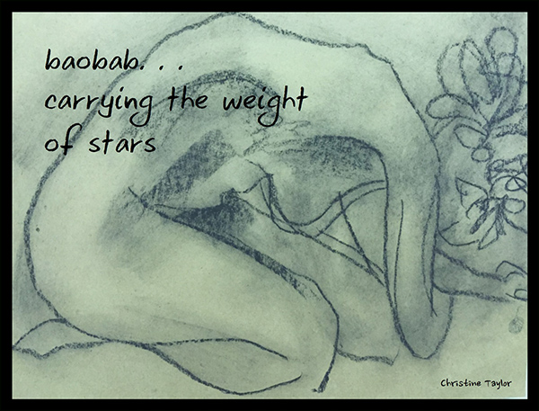'baobab... / carrying the weight / of stars' by Christine Taylor