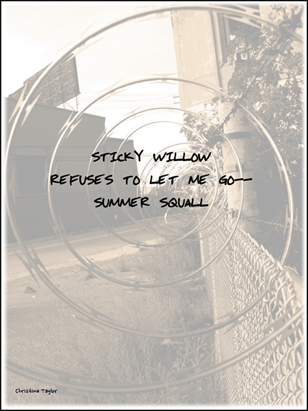 'sticky willow / reuses to let me go— / summer squall' by Christine Taylor