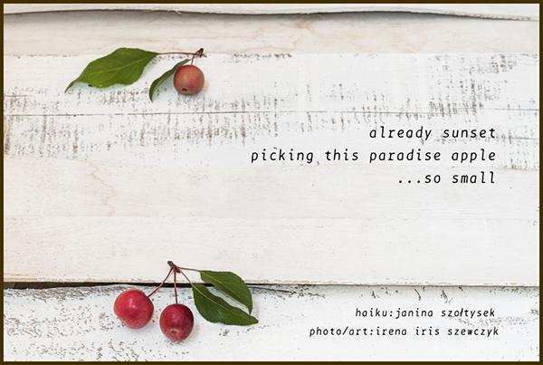 'already sunset / picking this paradise apple / ...so small' by Janina Szoltysek. Art by Irena Szewczyk