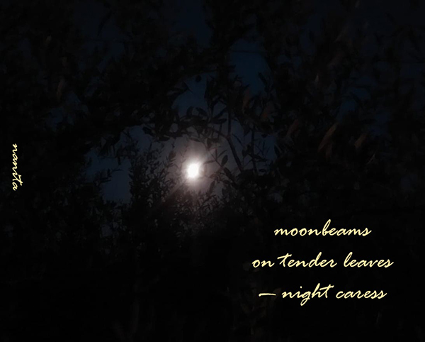 'moonbeams / on tender leaves / —night caress' by Valentina Meloni
