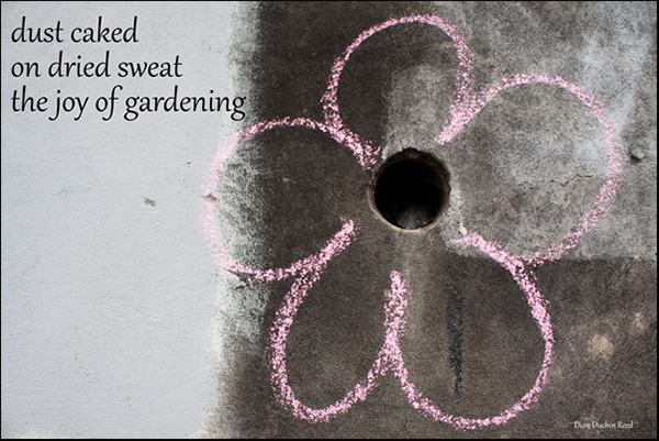 'dust caked / on dried sweat / the joy of gardening' by Dian Reed