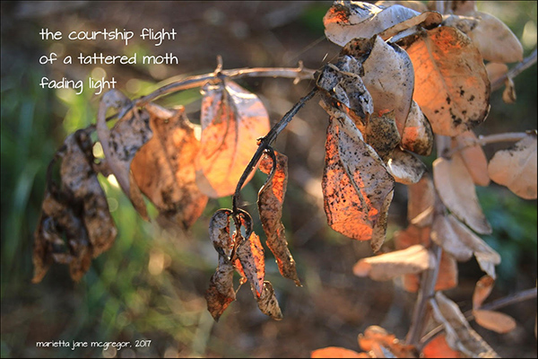 'the courtship flight / of a tattered moth / fading light' by Marietta McGregor