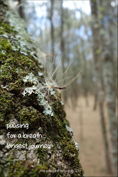 'pausing / for a breath... / longest journey' by Marietta McGregor