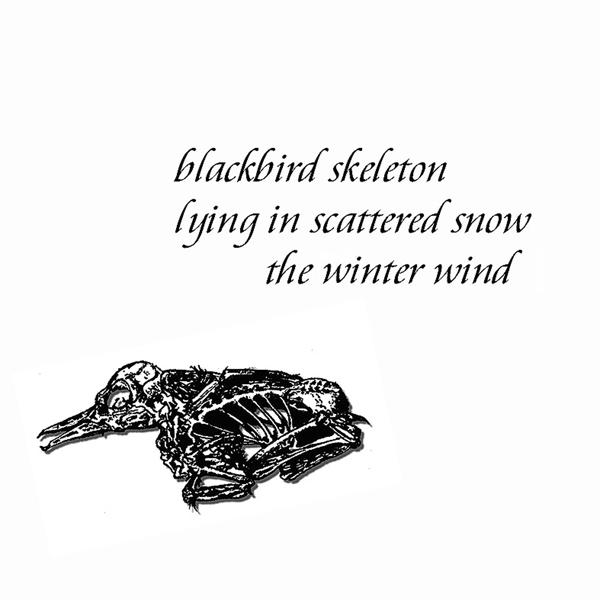 """'blackbird skeleton / lying in scattered snow / the winter wind"""" by John Hawkhead"""