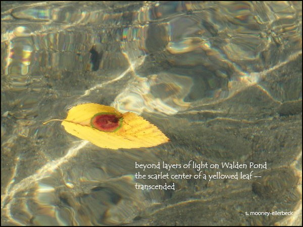 'beyond layers of light on Walden Pond— / the scarlet centre of a yellowed leaf— / transcended' by Sandra Mooney-Ellerbeck
