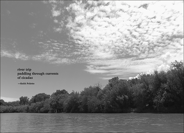 'river trip / paddling through currents / of cicadas' by Keith Polette