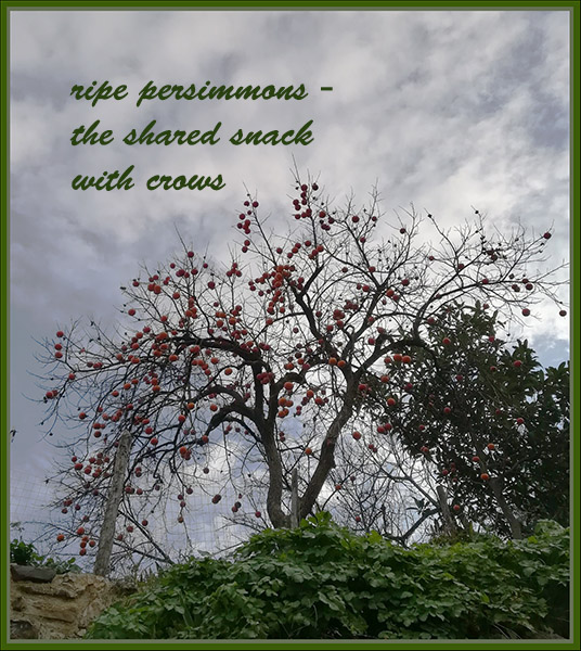 'ripe persimmons– / the shared snack / with crows' by Antonio Sacco