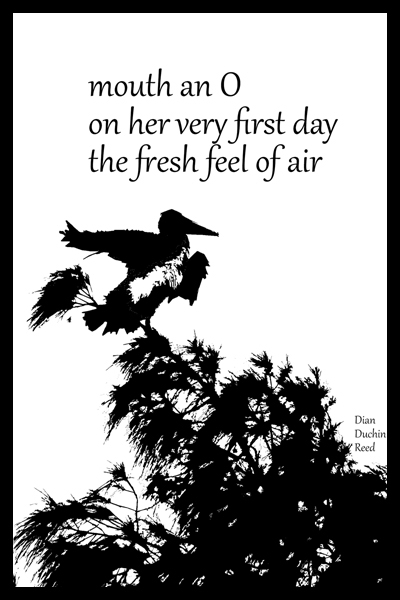 'mouth an O / on her very first day / the fresh feel of air' by Dian Duchin Reed