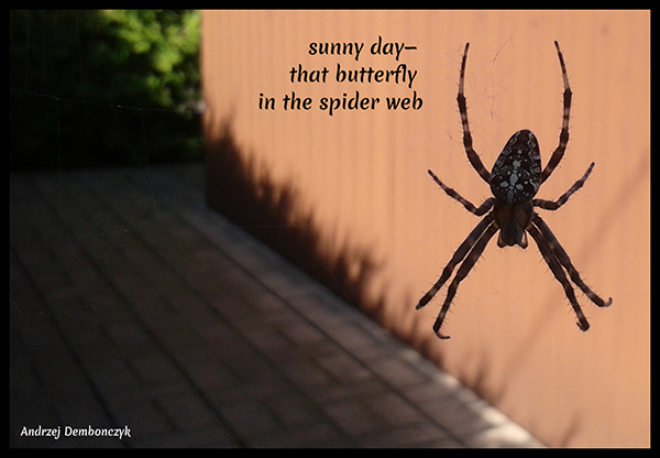 'sunny day— / that butterfly / in the spider web' by Andrzej Dembonczyk