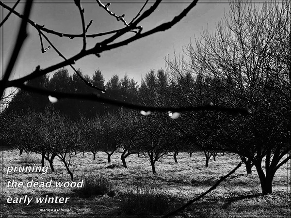 'pruning / the dead wood / early winter' by Marilyn Ashbaugh