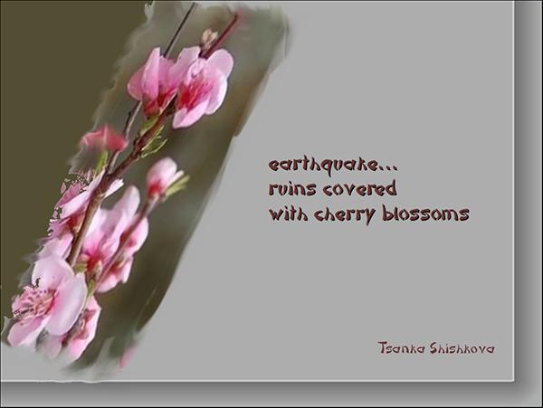 'earthquake... / ruins covered / with cherry blossoms' by Tsanka Shishkova
