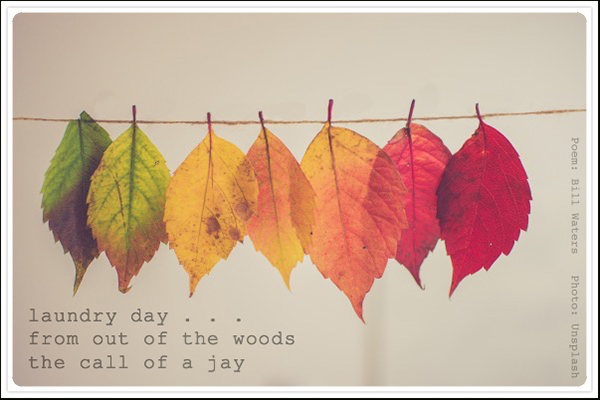'laundry day... / from out of the woods / the call of a jay' by Bill Waters. Art by Unsplash
