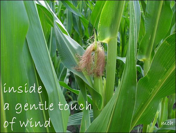 'inside / a gentle touch / of wind' by Marta Chocilowska