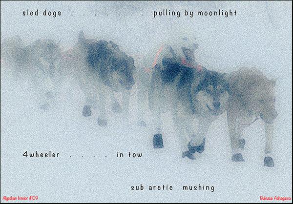 'sled dogs... / pulling by moonlight / 4wheeler in tow / sub arctic mushing' by Bukusai Ashagawa
