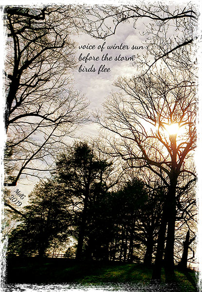 'voice of winter sun / before the storm / birds fle' by Mary Ellen Gambutti