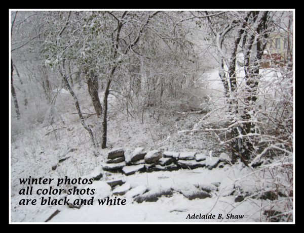 'winter photos / all color shots / are black and white' by Adelaide Shaw