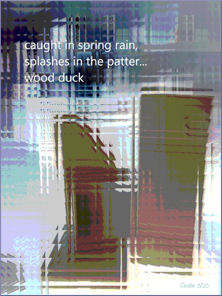 'caught in spring rain, / splashes in the patter... / wood duck' by Richard Grahn