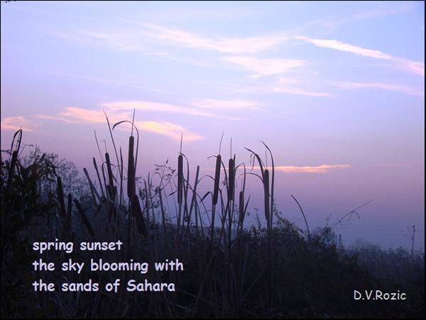 'spring sunset / the sky blooming with / the sands of the sahara' by DV Rozic