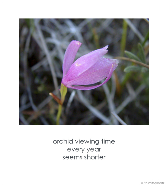 'orchid viewing time / every year / seems shorter' by Ruth Mittelholtz.
