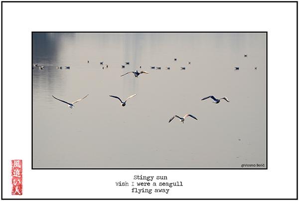 'stingy sun / wish I were a seagull / flying away' by Damir Damir