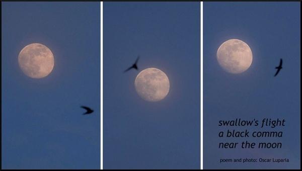 'swallow's flight / a black comma / near the moon' by Oscar Luparia