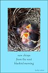 'new chirps / from the nest / bluebird morning' by Kathy Cotton