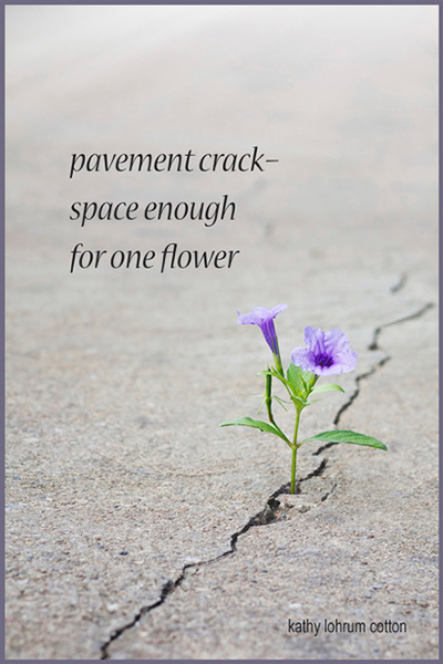'pavement crack— / space enough  / for one flower' by Kathy Cotton