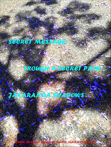 'secret message / through a secret path... / jakaranda shadows' by Romano Zeraschi. Art by Zlatka Timenova